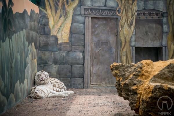 Художественная роспись стен в вольере тигров в Биопарке в Одессе | Aрт-студия «Peach»